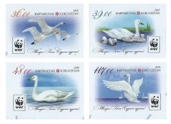 Kyrgyzstan. WWF. Whooper swan. Set of 4 imperforates stamps